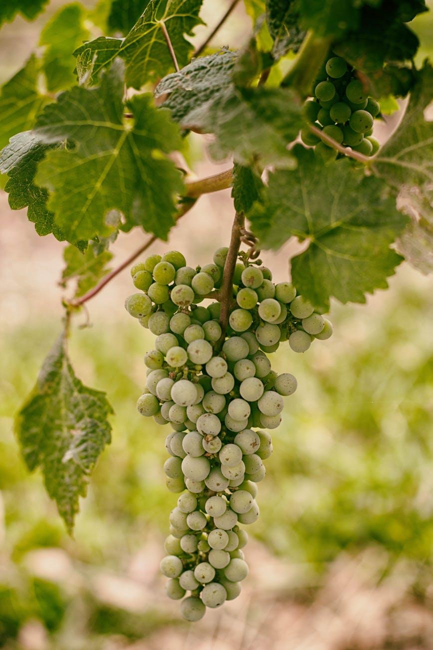 melbourne-yarra-valley-wine-76380.jpeg