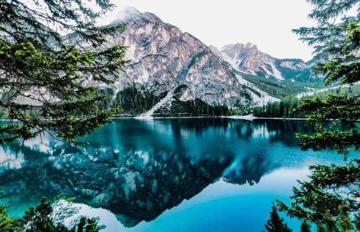 daylight forest glossy lake