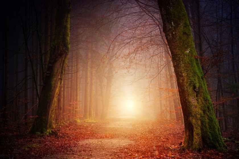 foggy path